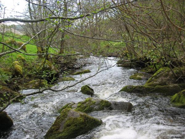 Rivière à truite à 2 kilomètres du gîte