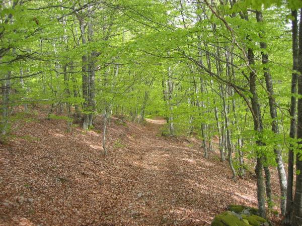 Ride in the forests of beeches in 300 meters of Holiday cottages